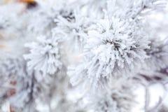 Un arbre neigeux Image stock