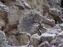 Un arbre neigeux simple pendant l'hiver Photos stock