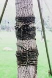 Un arbre nous est attaché avec des cordes photo libre de droits