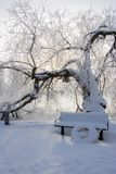 Un arbre nu dans un paysage neigeux photos libres de droits
