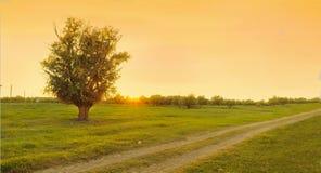 Un arbre par la route image libre de droits
