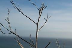 Un arbre pendant l'automne Photos stock