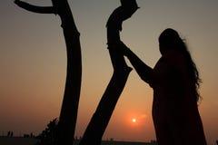 Un arbre pendant le coucher du soleil image libre de droits
