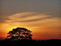 Un arbre pendant le crépuscule Photo libre de droits