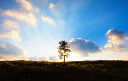 Un arbre rétro-éclairé photographie stock