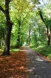 Un arbre a rayé la voie dans les bois d'automne Images stock