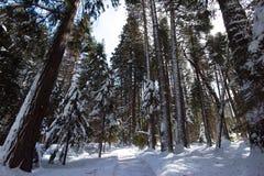 Un arbre a rayé le chemin bien que la forêt images stock