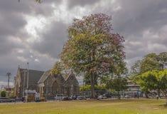 Un arbre rose de poui en fleur partielle devant la toute l'Église Anglicane de ` de saints Image libre de droits