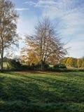 Un arbre s'est doré en soleil d'automne Images libres de droits