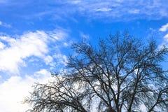 Un arbre sans feuilles contre un ciel nuageux bleu lumineux Photographie stock