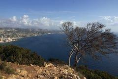 Un arbre sans vie au bord de la montagne, est ci-dessous une mer bleue Image stock