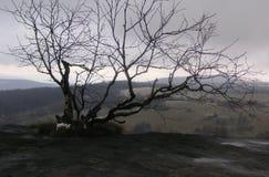 Un arbre simple sur la roche Photos stock
