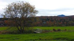 Un arbre solitaire image stock