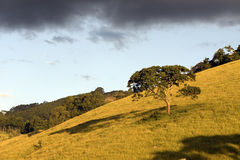 Un arbre solitaire s'est admirablement allumé en égalisant la lumière Images stock