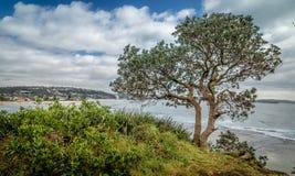 Un arbre solitaire sur la côte Photographie stock