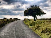 Un arbre solitaire sur une route de campagne désolée images libres de droits