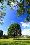 Un arbre sur l'herbe verte Images libres de droits