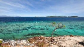 Un arbre sur la falaise au-dessus de l'océan Photos stock