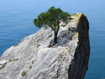 Un arbre sur la roche Images libres de droits
