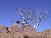 Un arbre sur les roches Photographie stock libre de droits