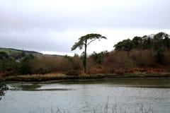 Un arbre sur un lac vide Photo stock