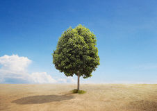 Un arbre sur une terre sèche Photos stock