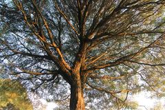 Un arbre tiré de dessous photographie stock