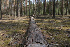 Un arbre tombé Photographie stock
