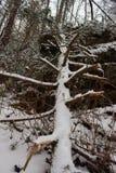 Un arbre tombé couvert par neige Images stock