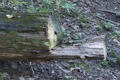 Un arbre tombé formant la chaise photo libre de droits
