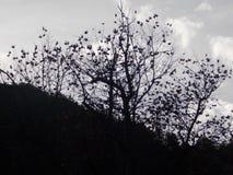 Un arbre triste ramifié Photo libre de droits
