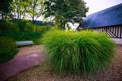 Un arbusto grande al lado de la trayectoria a la casa Foto de archivo