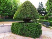 Un arbusto muy original en el parque fotos de archivo