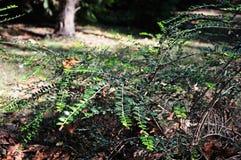 un arbusto pintoresco en el claro imagenes de archivo