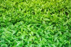 Un arbusto verde agradable en jardín bien ajardinado trae paz y un buen cambio para sentarse para cierta reflexión espiritual y a Foto de archivo libre de regalías