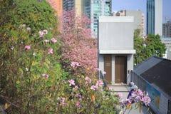 un'architettura di Histroic un mattone ha sviluppato la struttura alla HK fotografie stock libere da diritti