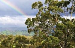 Un arcobaleno parziale contro un fondo delle nuvole e degli alberi di gomma scuri nel sole Fotografia Stock