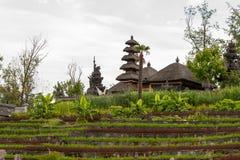 Un arroz coloca con el pueblo en el fondo Fotografía de archivo libre de regalías