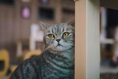 Un art du portrait d'un chat dans la chambre a rempli de lumière molle et de foyer mou d'utilisation Le point principal de foyer  Images libres de droits