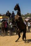 Un'arte dello spettacolo del cavallo Fotografie Stock Libere da Diritti