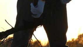 Un'ascia taglia i rami su un litorale al tramonto video d archivio