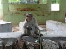 Un asiento del mono en un piso en el parque zoológico imagen de archivo libre de regalías