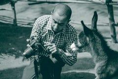 Un asino che controlla la sua foto Fotografia Stock