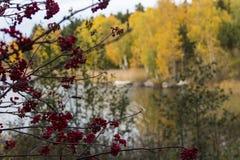 Un assortiment de couleurs d'automne images libres de droits