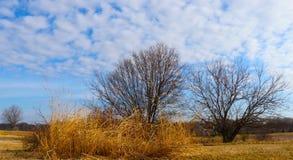 Un assortimento di pennellate di inverno, compreso gli alberi nudi, il grano dorato ed i soffi della nuvola fotografia stock
