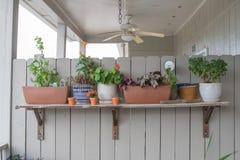 Un assortimento di piante meravigliosamente sistemate immagini stock