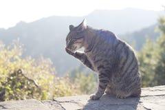 Un at Montserrat del gato, España Imágenes de archivo libres de regalías