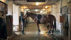 Un athlète tapote son cheval L'athlète féminin touche son cheval avant de le monter banque de vidéos