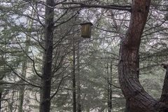 Un'attaccatura interessante del nido dell'uccello immagini stock libere da diritti