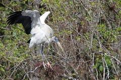 Un atterraggio della cicogna di legno Fotografia Stock